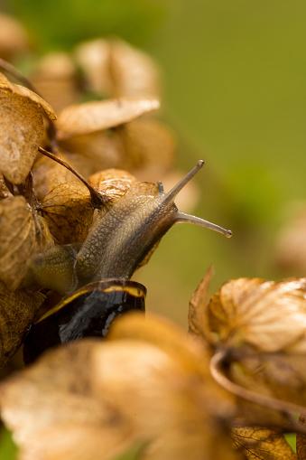 snails「Snail on Hydrangea」:スマホ壁紙(19)