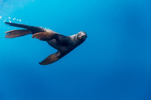 Sea Lion「Southern Sea Lion in Diego Ramirez Islands, Chile」:スマホ壁紙(9)