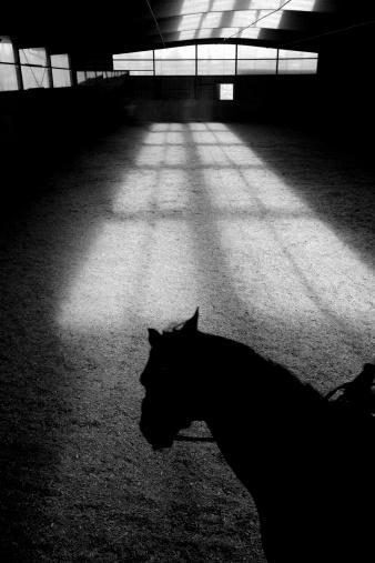 Recreational Horseback Riding「Shadow of Horse in Riding Ring」:スマホ壁紙(17)