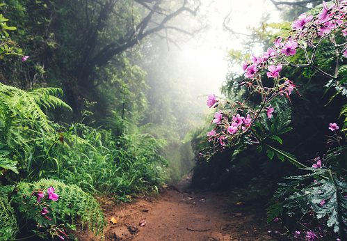Atlantic Islands「Walking Path On Madeira Island」:スマホ壁紙(11)