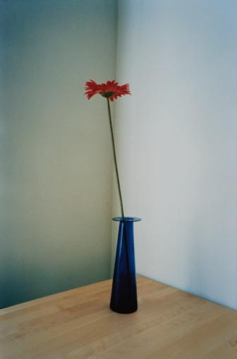 Contrasts「Red Flower in Blue Vase」:スマホ壁紙(1)