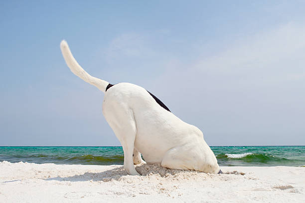 Searching Dog at Beach Digging:スマホ壁紙(壁紙.com)