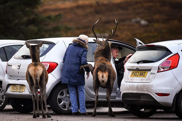animal「Red Deer At Glen Etive」:写真・画像(17)[壁紙.com]