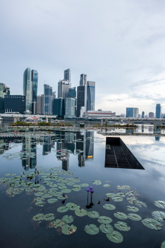 Water Lily「Singapore」:スマホ壁紙(6)