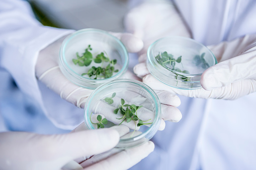 Human Hand「Scientists in lab holding germs in petri dishes」:スマホ壁紙(11)