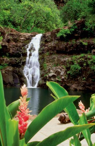 オアフ島「Hawaiian ginger plant in front of Waimea Falls, Oahu, Hawaii, USA」:スマホ壁紙(0)