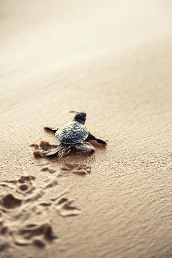 Sri Lanka「New born sea turtle」:スマホ壁紙(19)