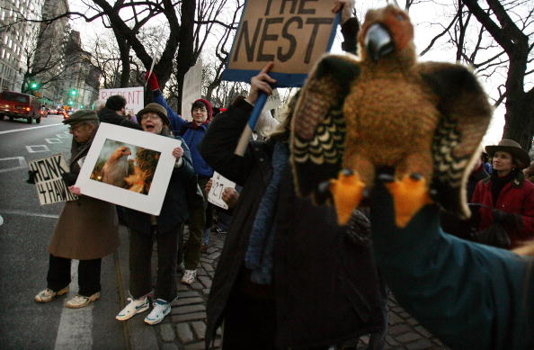 Hawk - Bird「Hawks Homeless After Eviction From NYC Co-Op」:写真・画像(15)[壁紙.com]