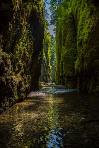 Oneonta Gorge「Oneonta Gorg, Columbia River Gorge」:スマホ壁紙(5)