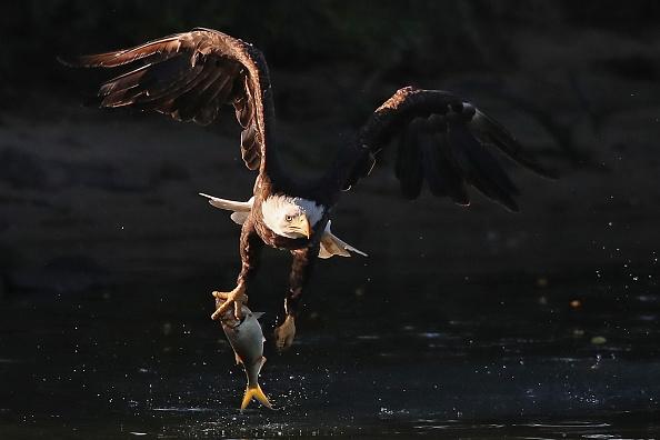 Carrying「Eagles on Long Island」:写真・画像(16)[壁紙.com]
