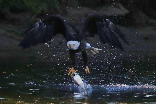 Eagles on Long Island:ニュース(壁紙.com)