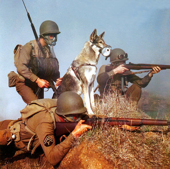 Animal「Rin Tin Tin's War」:写真・画像(14)[壁紙.com]