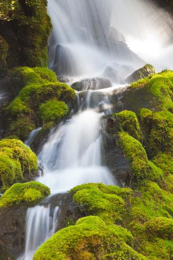 Umpqua National Forest「Clearwater Falls Umpqua N.F., Moss covered rocks」:スマホ壁紙(1)