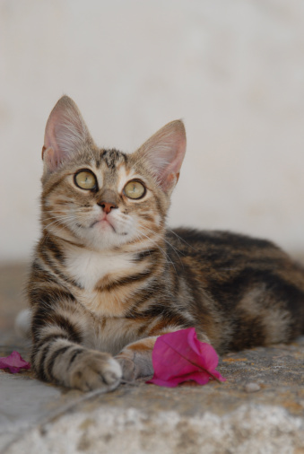 Kitten「junges Hauskätzchen in Griechenland」:スマホ壁紙(0)