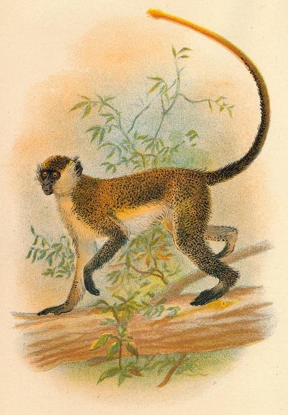 Limb - Body Part「Green Guenon」:写真・画像(9)[壁紙.com]