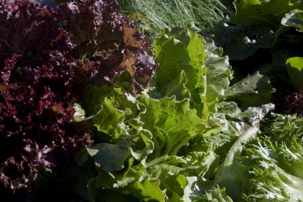 Salad「Namdo, Sweden」:写真・画像(10)[壁紙.com]