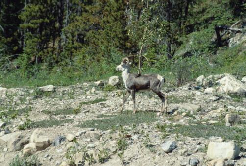 Stone Mountain - Georgia「Mountain goat on rocky terrain」:スマホ壁紙(4)