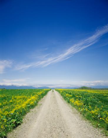 Uncultivated「Dirt road lined with wildflowers, Obihiro, Hokkaido, Japan」:スマホ壁紙(5)