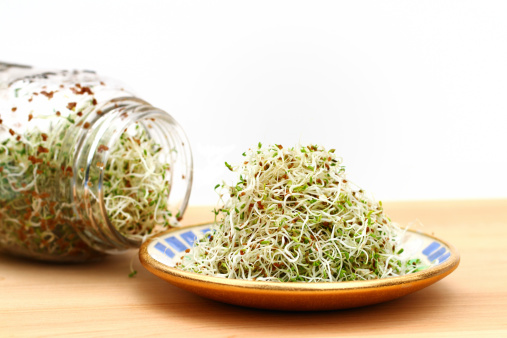 Plant Process「Alfalfa sprouts on plate and in jar」:スマホ壁紙(16)