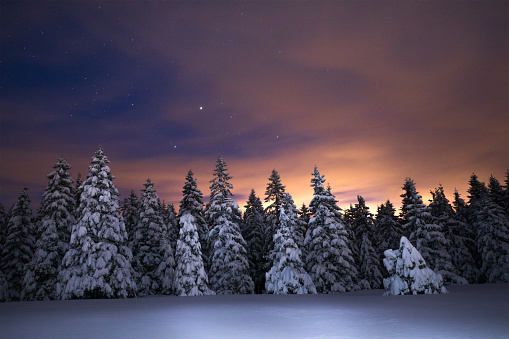 Slovenia「Night Sky Above Winter Forest」:スマホ壁紙(7)