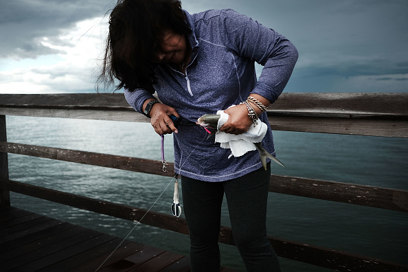 Naples - Florida「Red Tide Algae Blooms Continue On Florida's Gulf Beaches」:写真・画像(17)[壁紙.com]