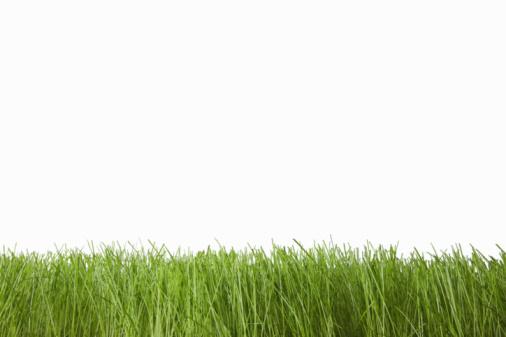 Grass「Grass on white」:スマホ壁紙(16)