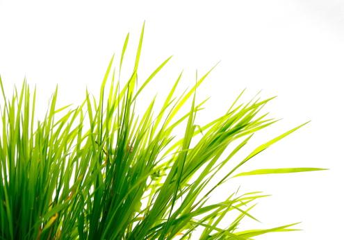 イースター「草にホワイト」:スマホ壁紙(14)