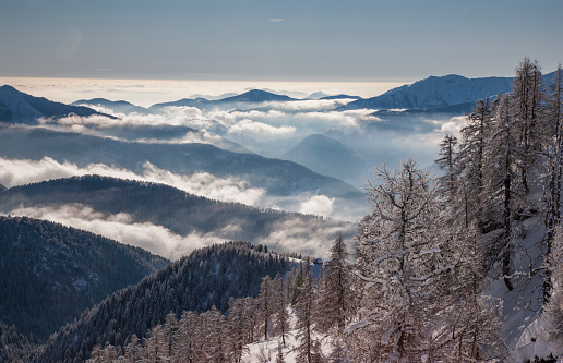 Piedmont - Italy「Bare trees by mountains with fog in Piedmont, Italy」:スマホ壁紙(7)