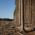 Ardennes Forest壁紙の画像(壁紙.com)