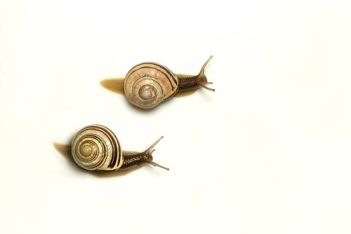 カタツムリ「Two garden snails」:スマホ壁紙(2)