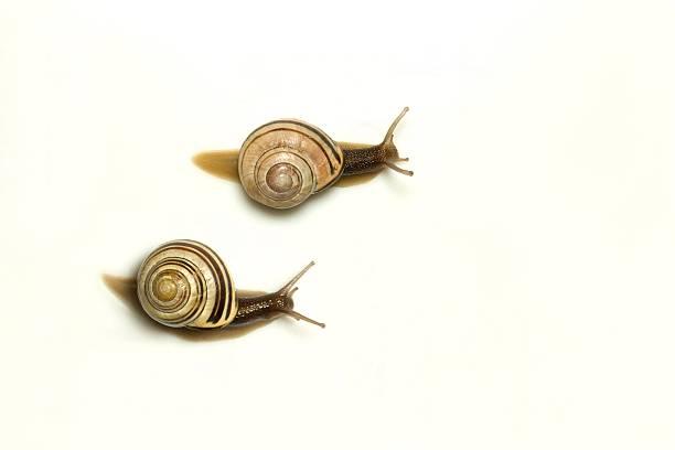 Two garden snails:スマホ壁紙(壁紙.com)