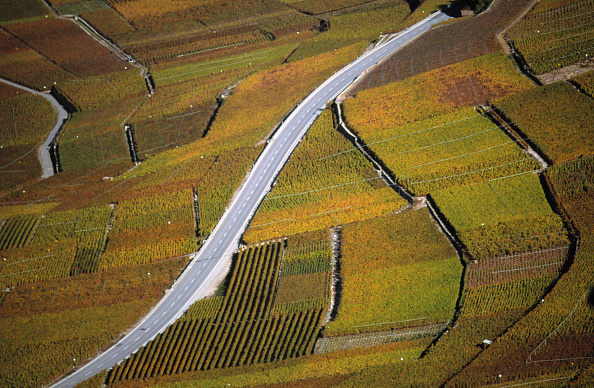 Vaud Canton「Vineyards - region of Lavaux - Canton of Vaud - Switzerland」:写真・画像(14)[壁紙.com]