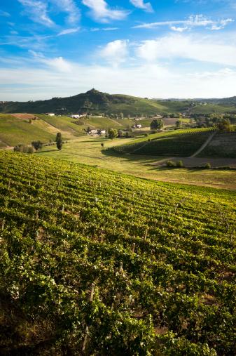 Piedmont - Italy「Vineyards」:スマホ壁紙(19)