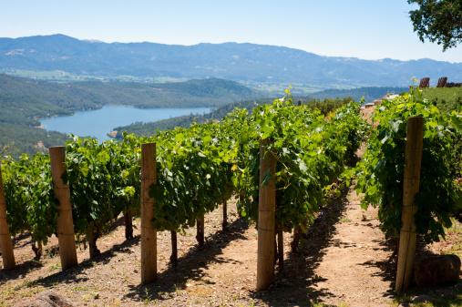 Trellis「Vineyards」:スマホ壁紙(10)