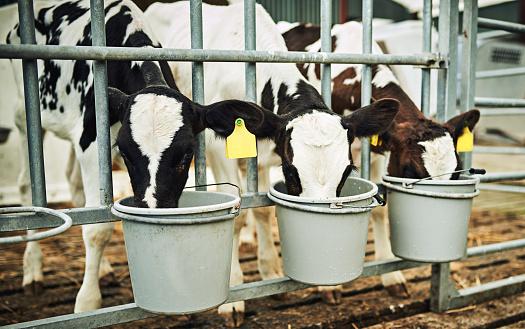 Drinking「They love their milk」:スマホ壁紙(8)