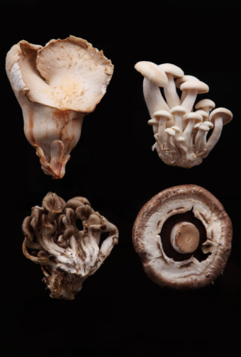 Oyster Mushroom「Various Species of Mushrooms」:スマホ壁紙(14)