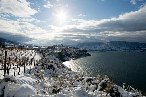 Frozen「Winter Vineyard Okanagan Valley」:スマホ壁紙(8)