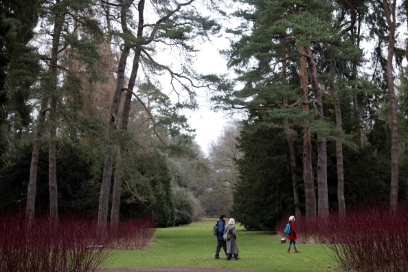Gloucester - England「Woodlands Under Threat From Forestry Commission Sell Off」:写真・画像(8)[壁紙.com]