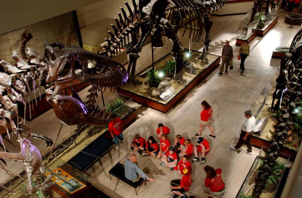 Museum「Researchers Unveil T-Rex Skull」:写真・画像(9)[壁紙.com]