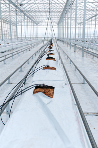 Greenhouse「Hydroponic Tomato Production Greenhouse」:スマホ壁紙(11)