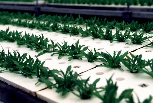 Greenhouse「Hydroponic Farming」:スマホ壁紙(10)