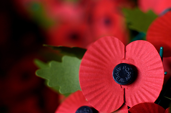 Poppy - Plant「British Legion Gears Up For The 2015 Launch Of The Poppy Appeal」:写真・画像(1)[壁紙.com]