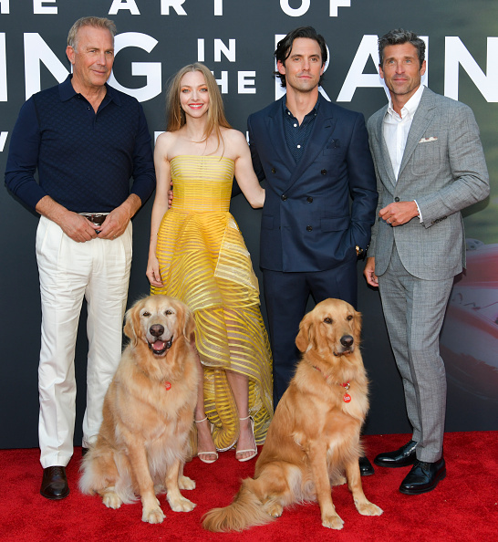"Amanda Seyfried「Premiere Of 20th Century Fox's ""The Art Of Racing In The Rain"" - Red Carpet」:写真・画像(19)[壁紙.com]"