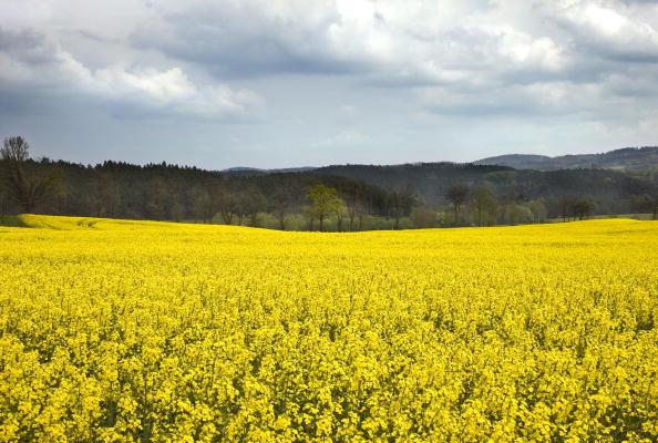 Pasture「Krasna Hora, Czech Republic」:写真・画像(2)[壁紙.com]