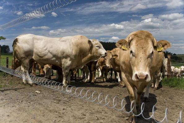 Pasture「Krasna Hora, Czech Republic」:写真・画像(16)[壁紙.com]