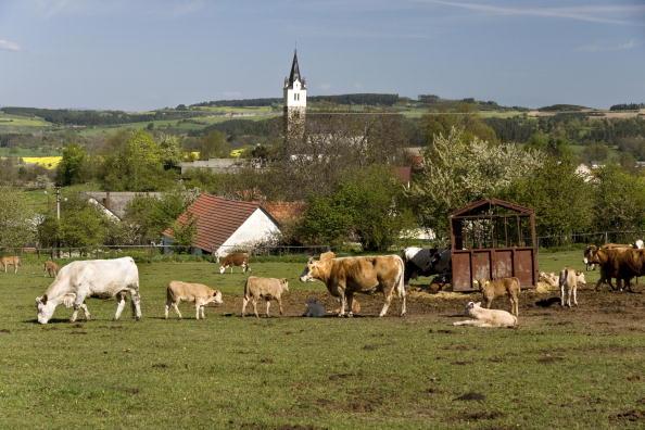 Pasture「Krasna Hora, Czech Republic」:写真・画像(6)[壁紙.com]