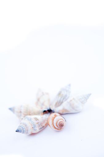 Sailor「Shellfishes forming a circle」:スマホ壁紙(17)
