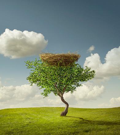 鳥の巣「Empty bird's nest in tree」:スマホ壁紙(19)