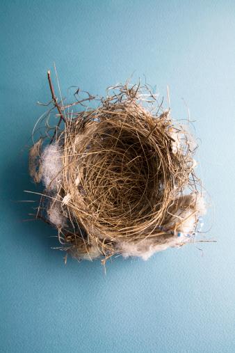 鳥の巣「空の鳥の巣にブルー」:スマホ壁紙(3)
