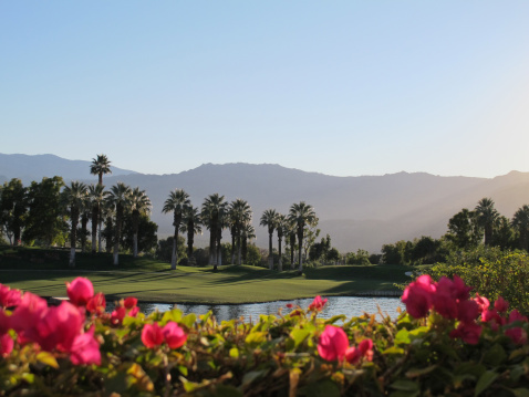 Water Hazard「Palm Springs golf course with lush greens and plants」:スマホ壁紙(15)